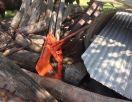 Kubota Hay Forks